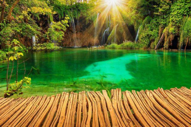 фотообои лес и озеро