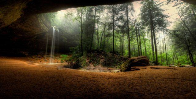 лес на фотообоях