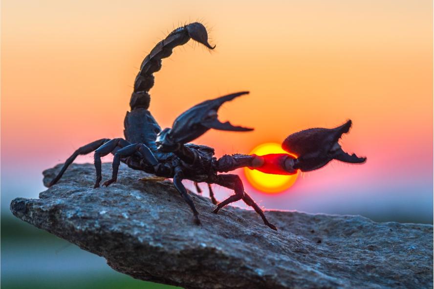 Фотообои скорпион на закате
